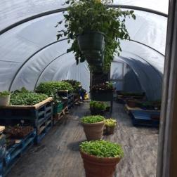 Renvyle Kitchen Garden 2